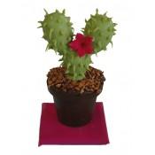 Шоколадова саксийка с кактус